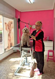 Una sesión de peluquería canina