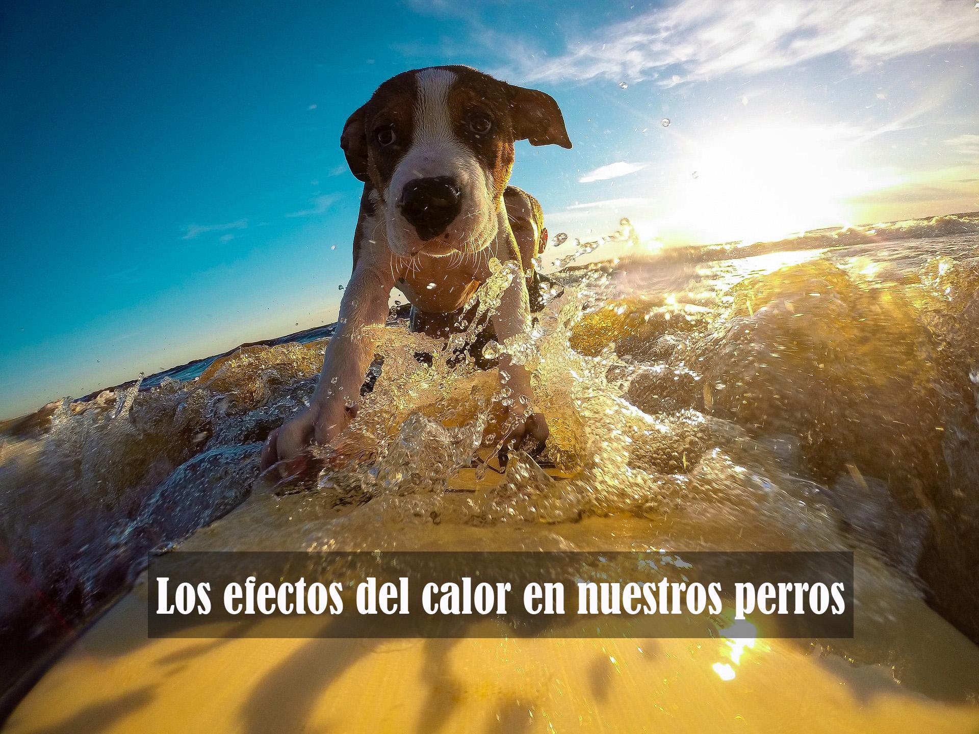 El calor en los perros