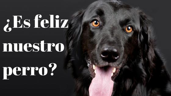 La felicidad canina