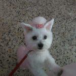 La perrita Lola