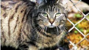 El gato, llanero solitario