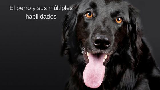 El perro y sus múltiples habilidades