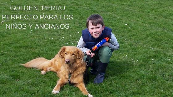 Golden, perro perfecto para los niños y ancianos