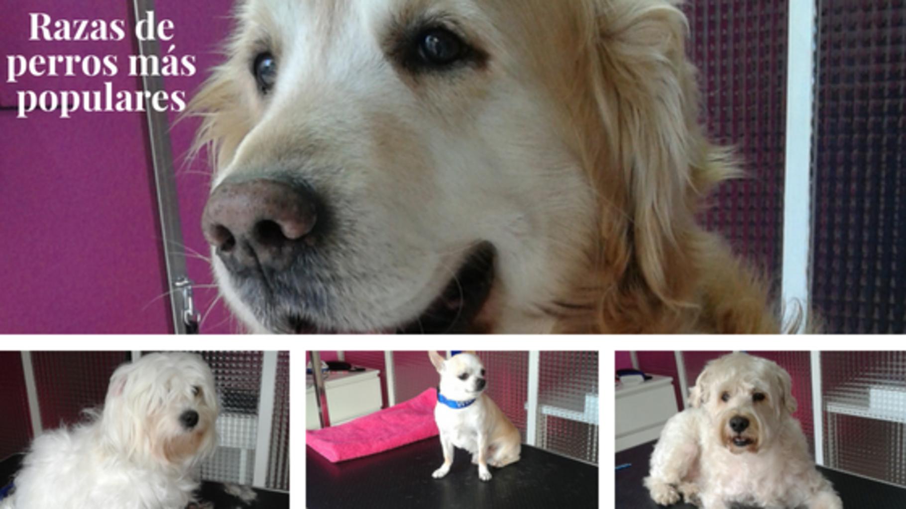 Razas de perros más populares-blog