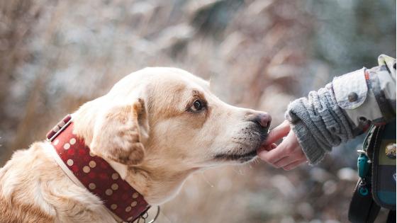 Los perros como terapia en las personas mayores