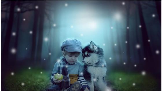 husky perro sociable y fiel