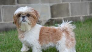 Aspectos a tener en cuenta en el celo en las perras
